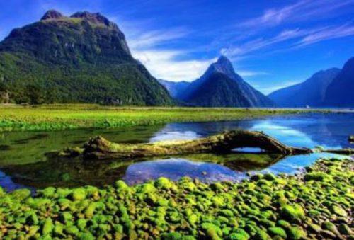 自然豊かな風景の画像