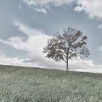 寂しい木の画像