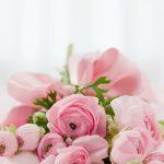ピンクの花の画像