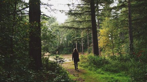 森林の中にいる人の画像