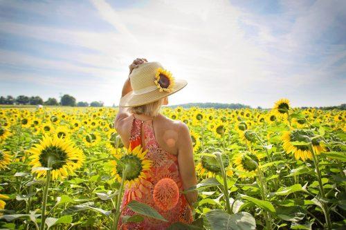 ひまわり畑にいる女性の画像
